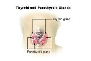 endocrinology parathyroid picture 5