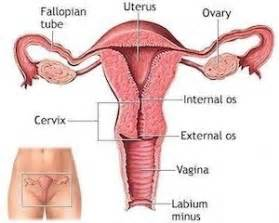 ultrasound of s stories with female doctor picture 10