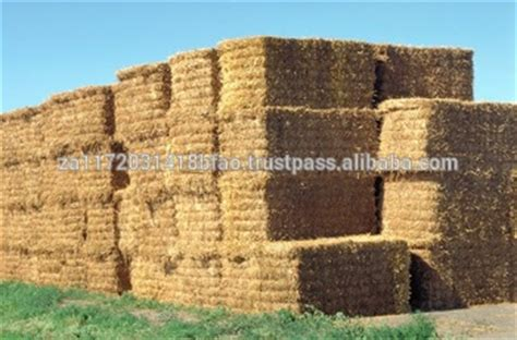 3 string alfalfa bales for wholesale in texas picture 6