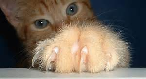 cat pictures showing claws and teeth picture 10