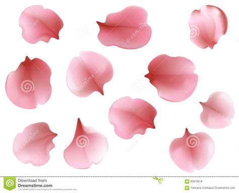white petal japanese translatiin picture 1