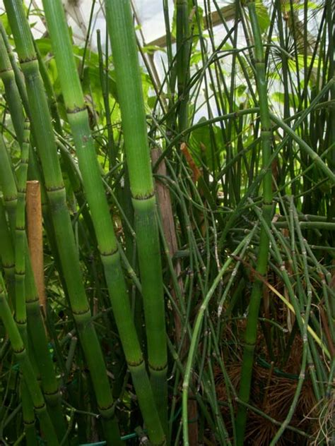control horsetail picture 2