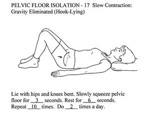 physical therapy exercises diagrams for bladder control picture 1