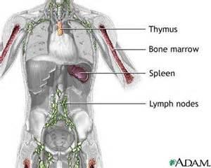 autoimmune thyroiditis disease lymphocytic lymph nodes picture 5