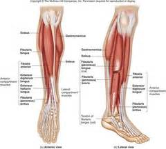 intrinsic muscle disease of the foot and ankle picture 14