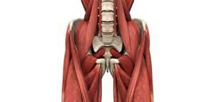 iliopsoas muscle picture 9