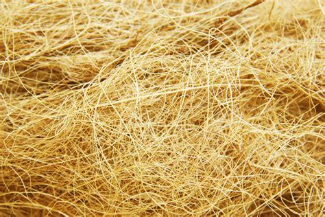 palm oil fiber colon picture 5
