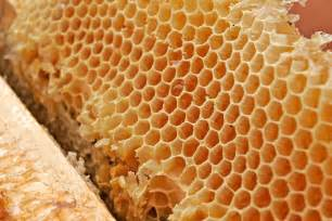 Honey comb for your colon picture 1