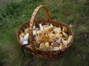 edible fungi picture 2