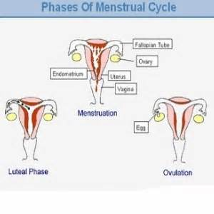 uterine phase cleanse picture 10