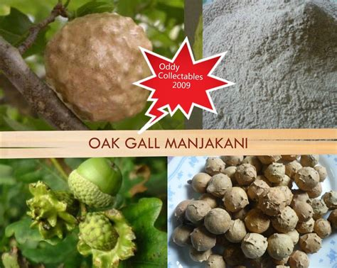 what stores sale oak gall manjakani in memphis picture 1