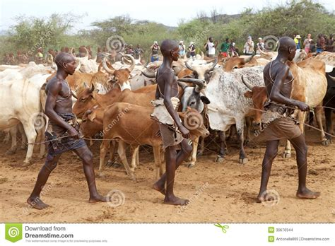 men and raw bovine picture 11