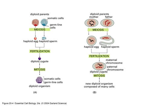 cell skin reproduction picture 11