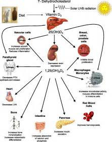 vitamin d and liver function picture 1