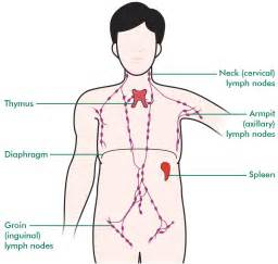 autoimmune thyroiditis disease lymphocytic lymph nodes picture 5