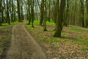 woods picture 7