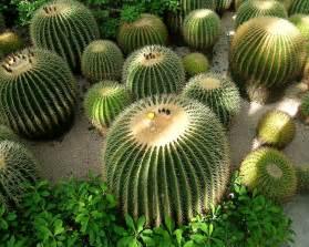 cactus picture 5