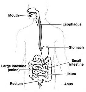 causes of burning sensation in gastrointestinal tract picture 14
