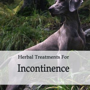 herbal incontinence meds picture 2