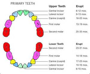 can a 2 month old infant teeth picture 5