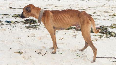 canine hyperthyroid meds picture 6