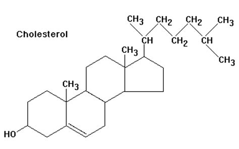 What is the two cholesterol picture 15