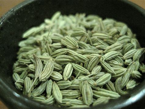 fennel seed picture 7