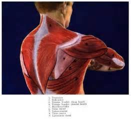 shoulder picture 18