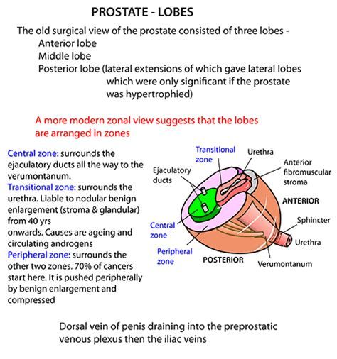 function of joints picture 13