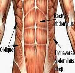 abdominal muscle strain picture 2