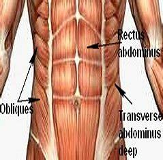 abdominal muscle pull picture 15