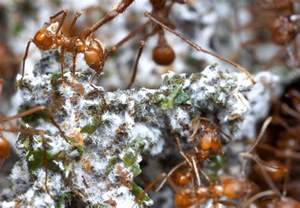 ant's food digestion picture 1