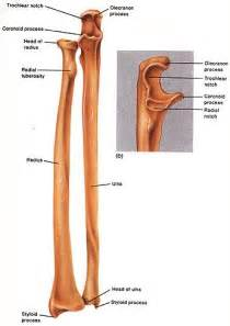 distal radial ulnar joint picture 10