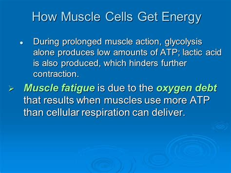 which muscle energy is used for 50 meter picture 14