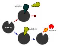 inhibitor picture 6