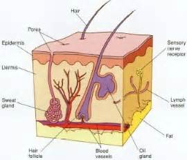 how many functions does skin have picture 10