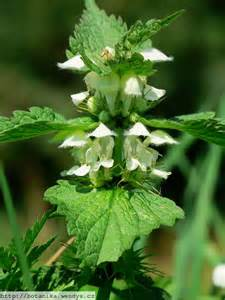 chinese herbs that test positive for benzodiazephine picture 6