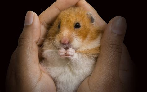 hamster h picture 1