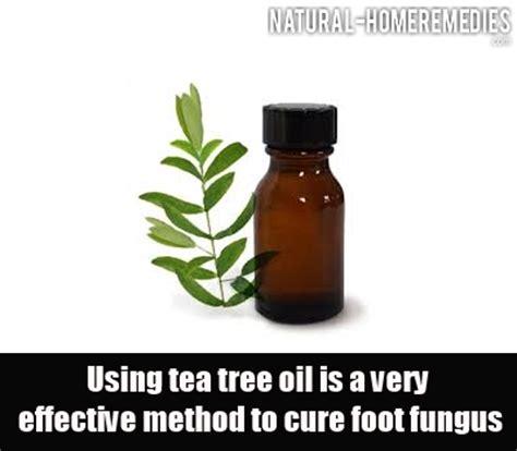 tea tree oil fungus prevention magazine picture 9