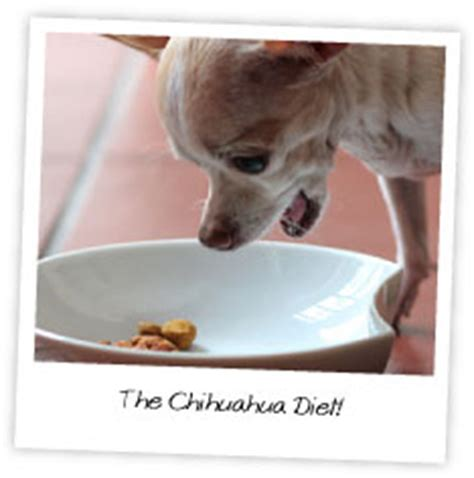 chihuahua diet picture 3