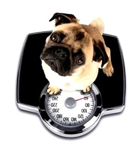 canine coughing weight loss picture 13