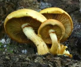 fungi mushrooms picture 1