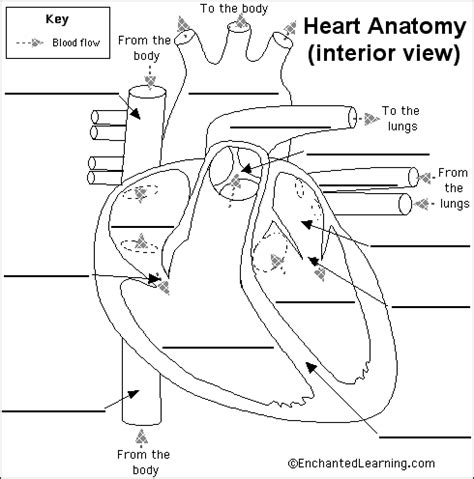 free blood flow animations picture 10