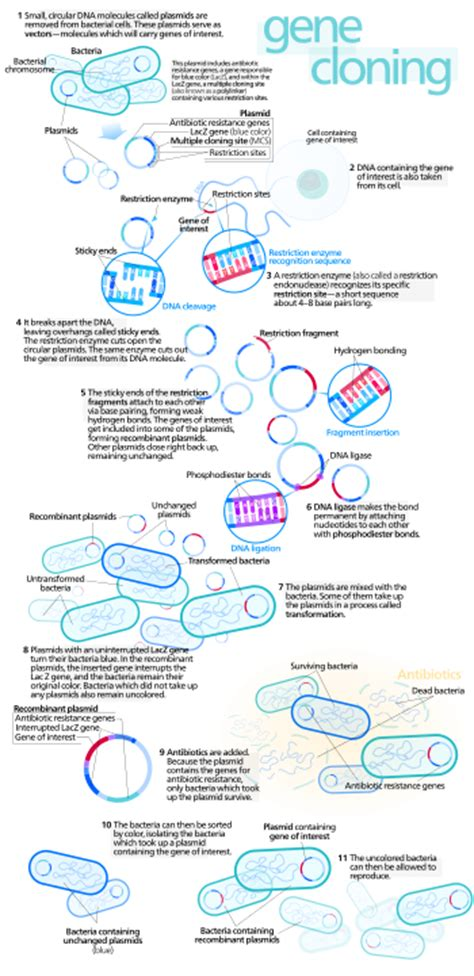 yeast and ecoli picture 14