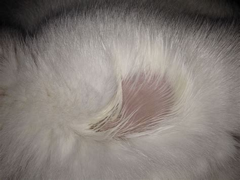 cat skin conditions picture 3