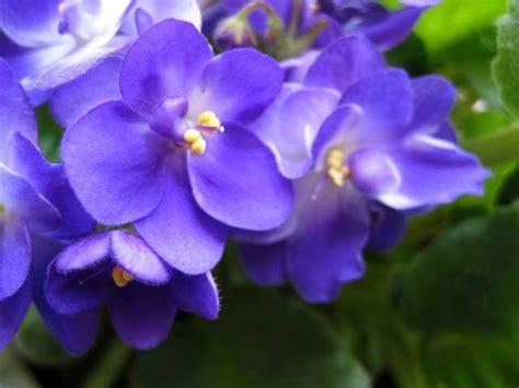 violet picture 3