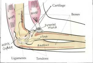 elbow joint picture 1