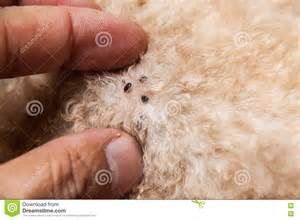 pictures of skin mites on dogs picture 14