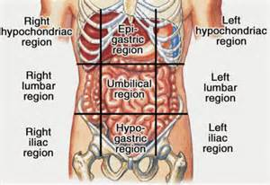 where is the liver located in the body picture 11