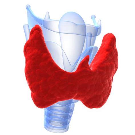 heterogeneous hypervascular thyroid gland picture 6